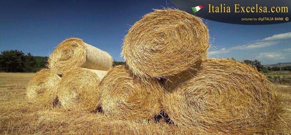 balle-di-fieno-agricoltura